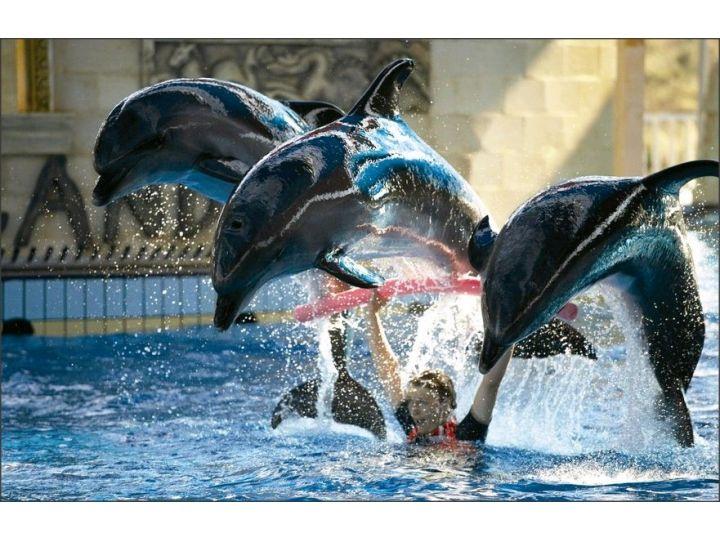 Hotel Dolphinpark Adaland
